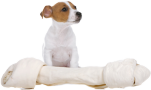 Jack Russel Terrier puppy with a big bone - Stock Image: 12875494