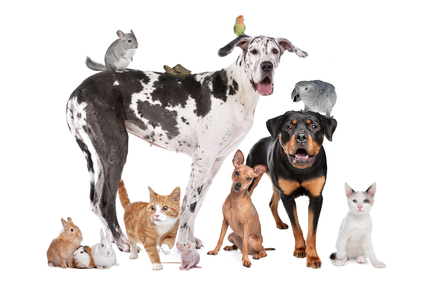 Pet owner segmentation